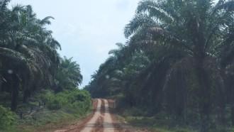 Mengenal Aek Latong-Batu Jomba, Jalur Angker Lintas Tengah Sumatra Utara